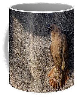 Sub-adult Yellow-billed Oxpecker On Cape Buffalo Coffee Mug