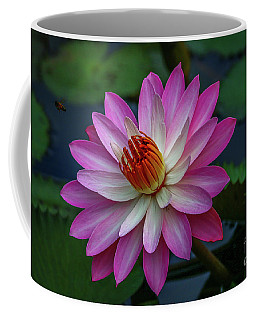 Coffee Mug featuring the photograph Sunlit Lily by Tom Claud