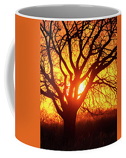 Coffee Mug featuring the photograph Sunset And Tree Silhouette 03 by Rob Graham