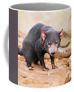 Tasmanian Devil In Hobart, Tasmania Coffee Mug