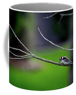 The Downey Woodpecker Coffee Mug