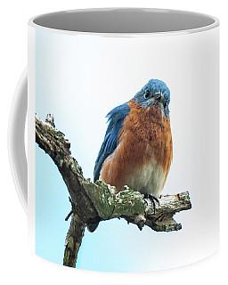 The Inquisitive Bluebird Coffee Mug