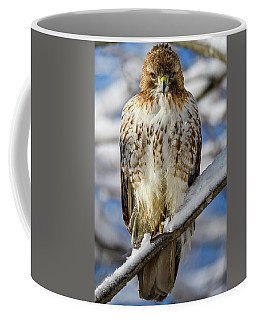 Coffee Mug featuring the photograph The Look, Red Tailed Hawk 1 by Michael Hubley