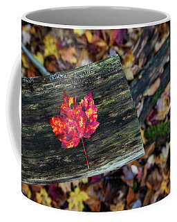 Coffee Mug featuring the photograph The Reason They Call It Fall by Brad Wenskoski
