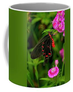 The Semperi Swallowtail Butterfly Coffee Mug
