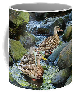 Three Mallard Ducks Swimming In A Stone Filled Brook. Coffee Mug