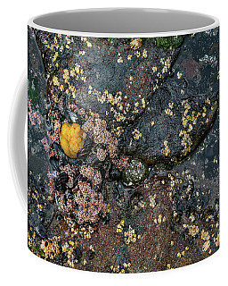 Coffee Mug featuring the photograph Tide Pool by Sharon Seaward