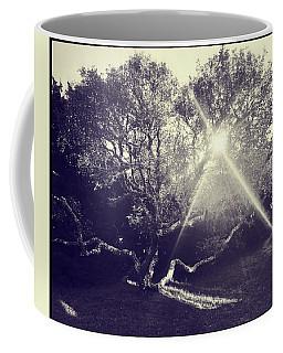 Tree At Sunset Coffee Mug