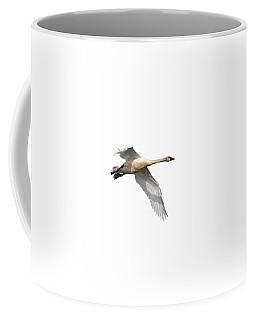 Trumpeter Swan Isolated 2018-1 Coffee Mug