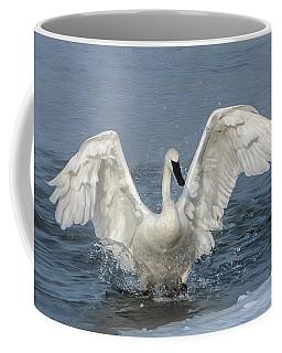 Trumpeter Swan Splash Coffee Mug