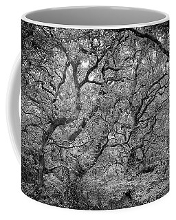 Coffee Mug featuring the photograph Twisted Forest by Nathan Bush