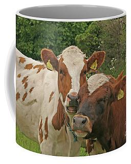 Coffee Mug featuring the photograph Two Cows by PJ Boylan