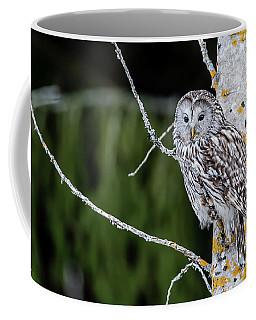 Ural Owl Perching On An Aspen Twig Coffee Mug