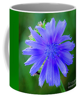 Vibrant Blue Chicory Blossom Close-up With Its Delicate Petals And Stamen Coffee Mug