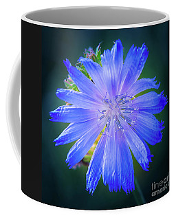 Vivid Blue Chicory Blossom Close-up With Its Delicate Petals And Stamen Coffee Mug