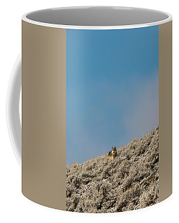 Coffee Mug featuring the photograph W24 by Joshua Able's Wildlife