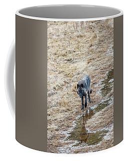 W51 Coffee Mug
