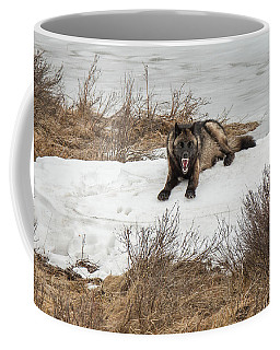 Coffee Mug featuring the photograph W57 by Joshua Able's Wildlife