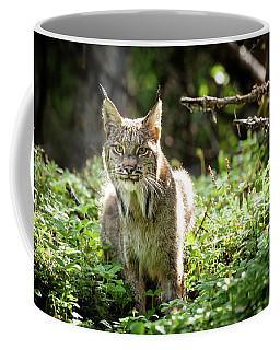 Coffee Mug featuring the photograph Watchful Mama Lynx by Tim Newton