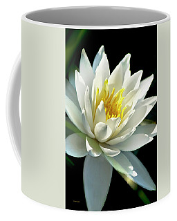 Coffee Mug featuring the photograph Water Lily by Christina Rollo