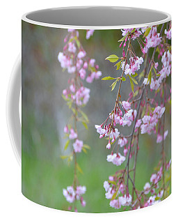 Coffee Mug featuring the photograph Weeping Cherry Blossoms by SimplyCMB