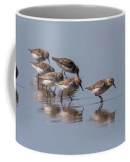 Western Sandpipers And Reflection Coffee Mug