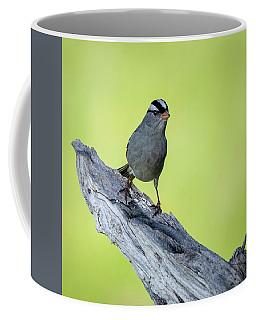 White Crowned Sparrow 1 Coffee Mug