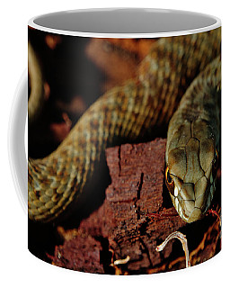 Wild Snake Malpolon Monspessulanus In A Tree Trunk Coffee Mug