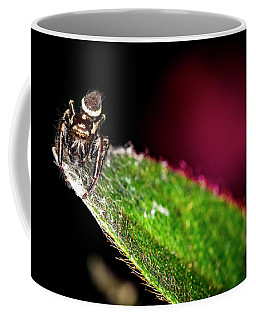 Wolf Spider Coffee Mug