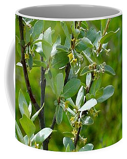 Coffee Mug featuring the photograph Wolf Willow And Barbed Wire by Ann E Robson
