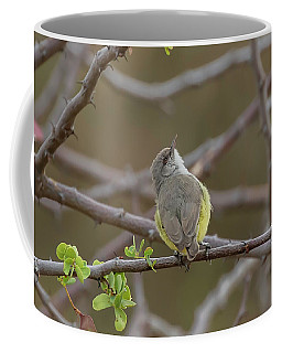Yellow-bellied Eremomela Coffee Mug