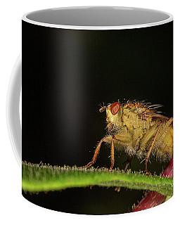 yellow Dung Fly Coffee Mug
