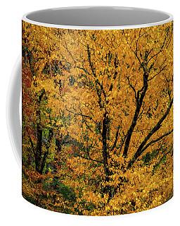 Yellow Tree Leaf Brilliance  Coffee Mug