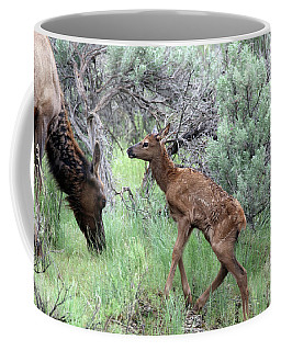 Yellowstone Elk Calf And Cow Coffee Mug