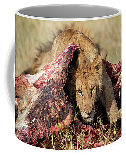 Young Lion On Cape Buffalo Kill Coffee Mug
