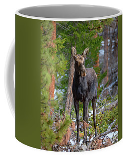 Young Moose In The Morning Forest Coffee Mug