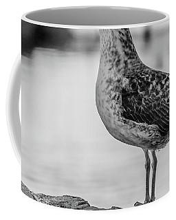 Young Seagull Coffee Mug