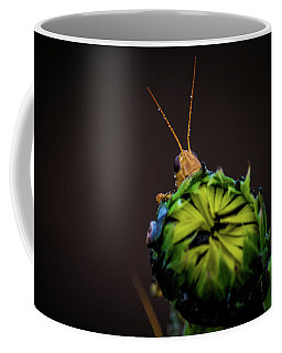 Peyton Vaughn Coffee Mugs