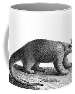 Anteater Coffee Mugs Fine Art America