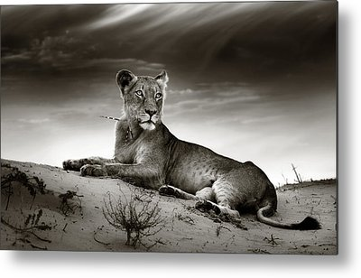 Panthera Metal Prints