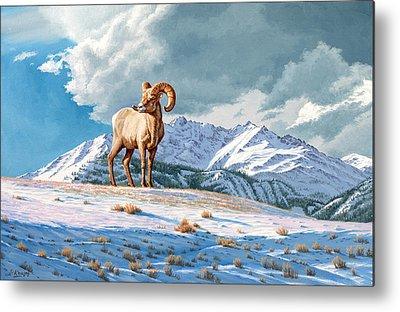 Bighorn Sheep Metal Prints
