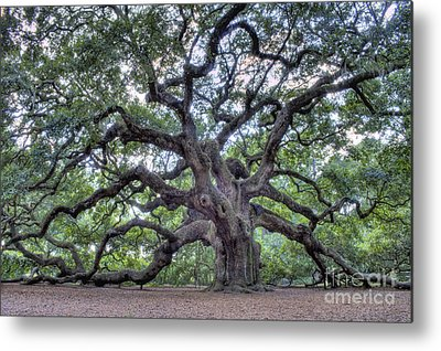 Angel Oak Tree Metal Prints