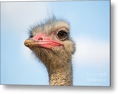 Designs Similar to Ostrich by George Atsametakis