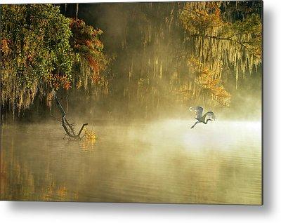 Egrets Photographs Metal Prints