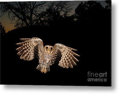 Birds In Flight At Night Photographs Metal Prints