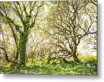 Oak Tree Metal Prints