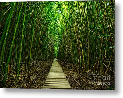 Bamboo Forest Metal Prints