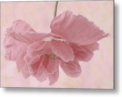 Suspended Pink Poppy Flower Metal Prints