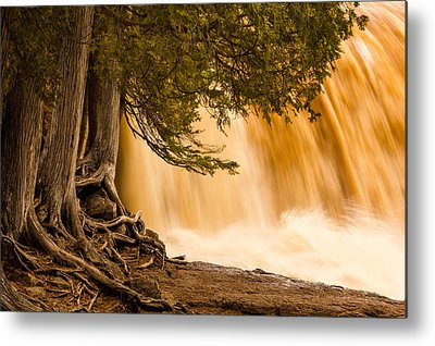 Rooted In Spring Mary Amerman Waterfall Cedar Tree Roots Tree Roots Photographs Metal Prints