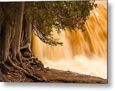 Rooted In Spring Mary Amerman Waterfall Cedar Tree Roots Tree Roots Metal Prints